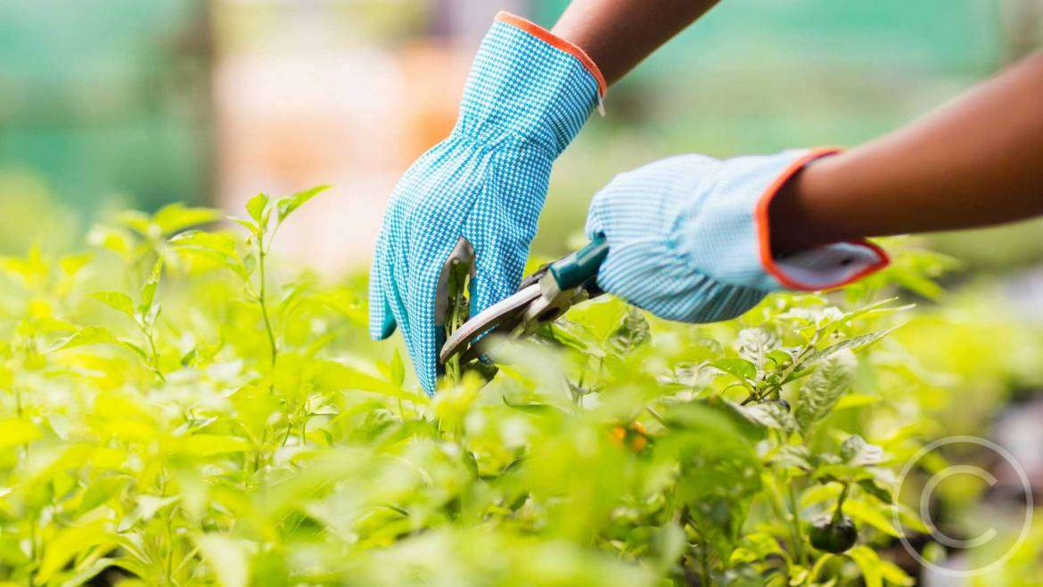 What to Grow in a Town Garden